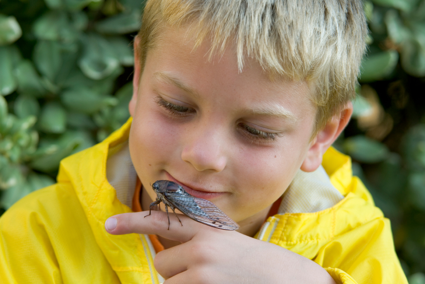 Cicada-Bug.jpg