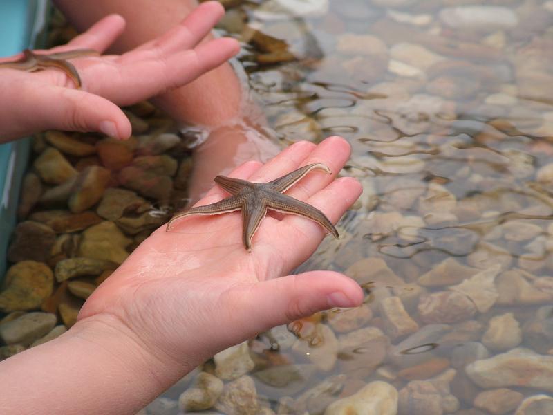 https://cf.ltkcdn.net/home-school/images/slide/75002-800x600-starfish.jpg