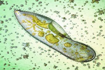 Biological micro organism
