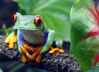 https://cf.ltkcdn.net/home-school/images/slide/204197-850x621-junglefrog_crop.jpg