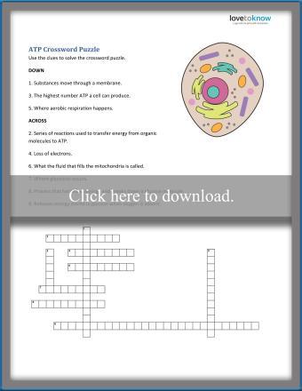 Cellular Respiration Worksheets For Middle School Lovetoknow