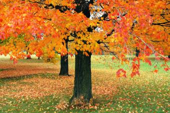 Wisconsin Fall Foliage