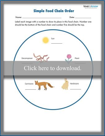 Food Chain Lesson and Worksheet