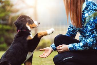 Teen training a dog on a park
