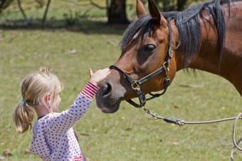 https://cf.ltkcdn.net/home-school/images/slide/74960-849x565-Girl-With-Horse.jpg