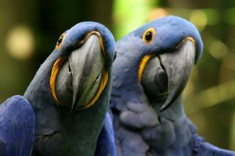 https://cf.ltkcdn.net/home-school/images/slide/74971-849x565-Parrots.jpg