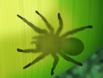 https://cf.ltkcdn.net/home-school/images/slide/74973-793x605-Spider.jpg