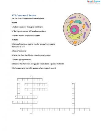 Cellular Respiration Worksheets For Middle School