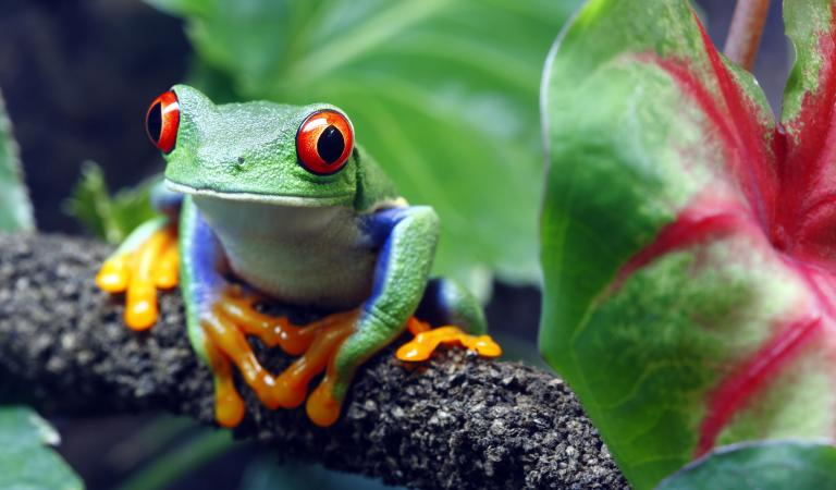 Pictures of animals that live in a jungle lovetoknow for Classic jungle house for small animals