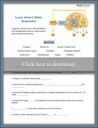 Learn About Cellular Respiration Worksheet