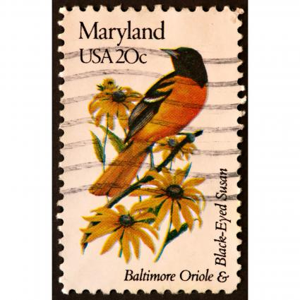 Maryland Baltimore Oriole