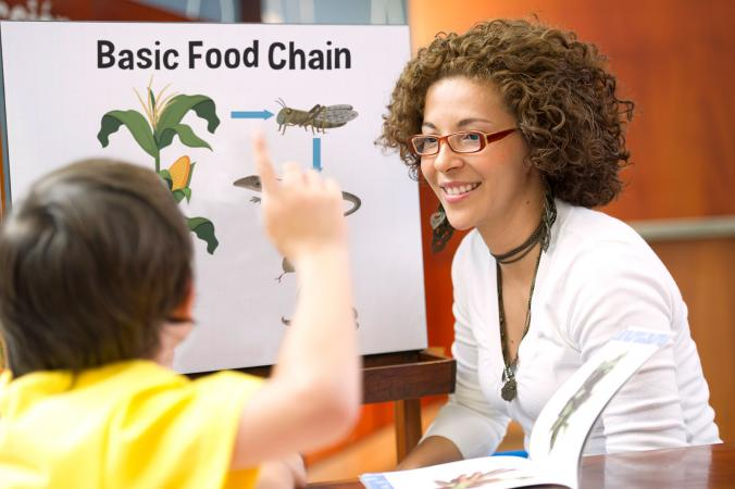 teaching children basic food chain