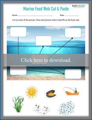 Marine Food Web Cut and Paste Worksheet