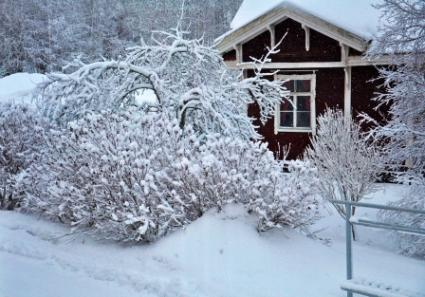 5 Signs Of Winter Wear On Your Home Lovetoknow
