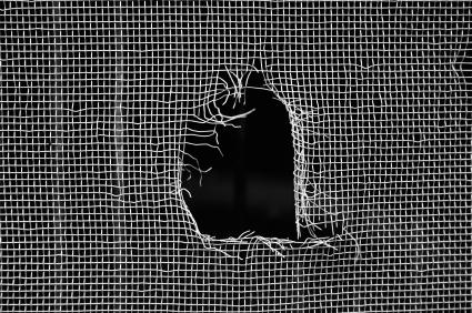 Hole in window screen