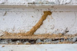 termite mud tunnel on foundation