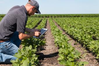 Agronomist Using a Tablet