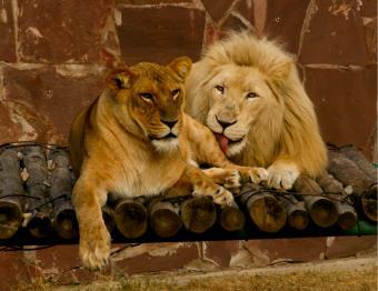 leo couple