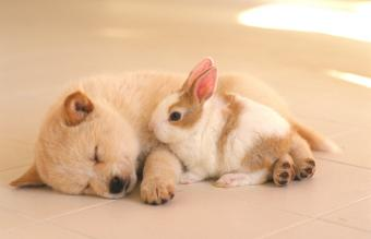 Chinese Astrology Signs: Rabbit and Dog Compatibility