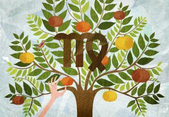 Understanding Virgo Season and Its Influence