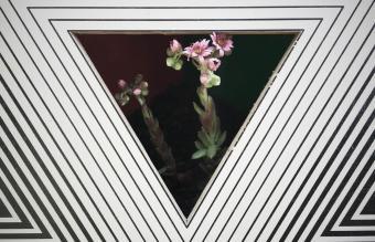 flowers seen through a triangle