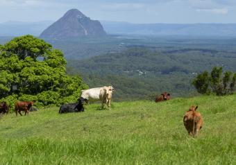 https://cf.ltkcdn.net/horoscopes/images/slide/256286-850x595-2_Cows_pasture.jpg