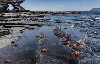 Crabs on Galapagos island