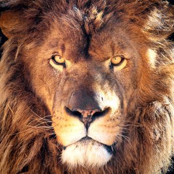 https://cf.ltkcdn.net/horoscopes/images/slide/258823-850x850-lion.jpg