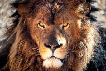 Female Leo Profile