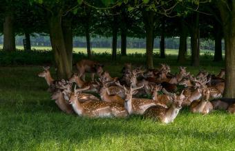 Deer Resting On Grassy Field