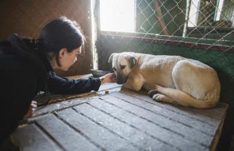 woman petting sad dog in animal shelter