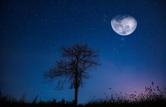 fields at night with a large moon