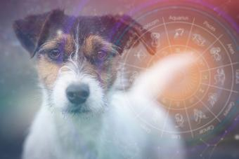 Dog Horoscopes: Your Pup's Personality, According to the Stars