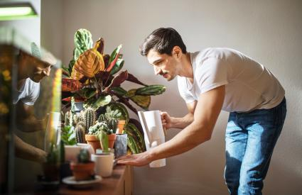 Man watering cacti plants in his living room