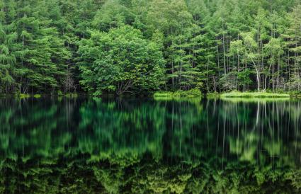 Green forest reflected in the pond