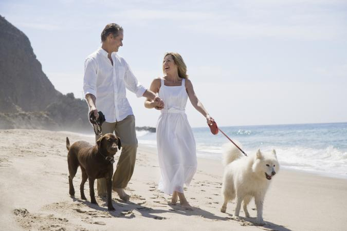 Couple walking dogs on the beach