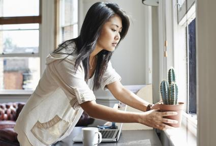Young woman moving cactus plant to windowsill