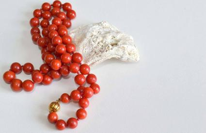 Red coral necklace on seashell