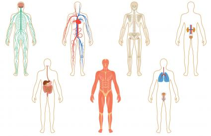 Set of human organs and systems