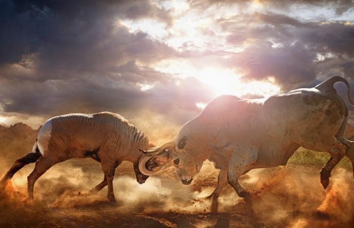 Ram and Bull