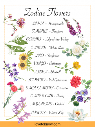 The Perfect Bloom for each Zodiac Sign
