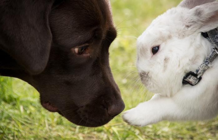 Perro y Conejo compatibilidad astrológica china