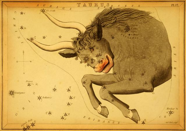 Signo del zodiaco Tauro