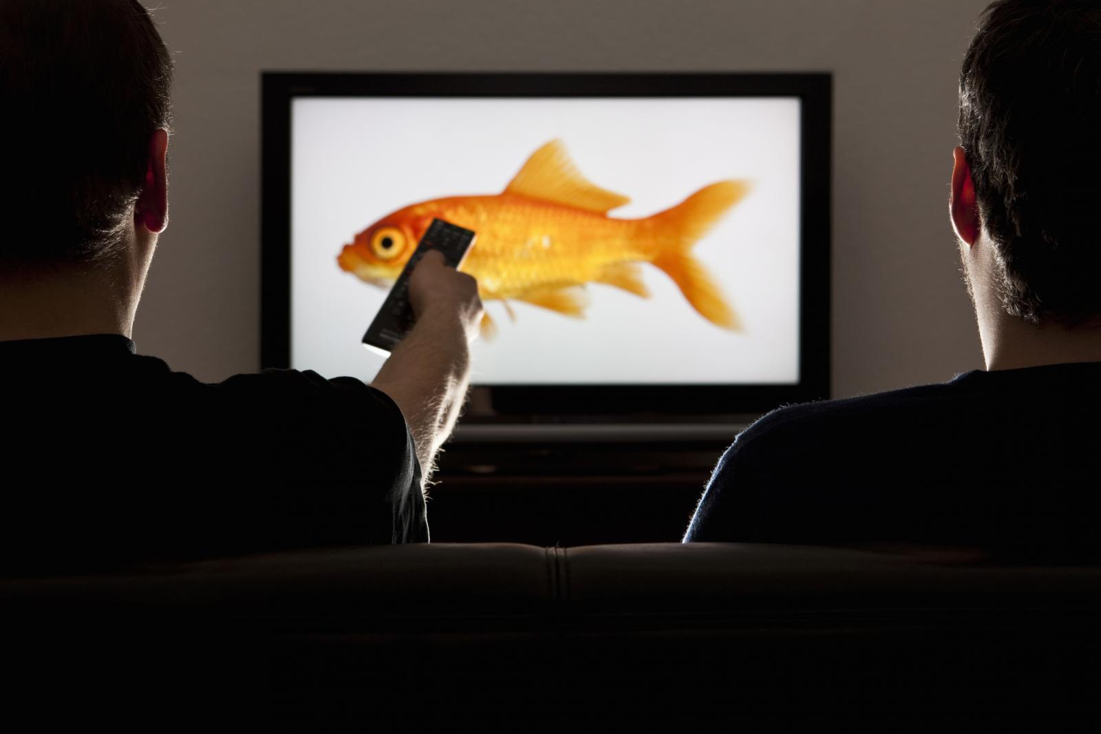 Dos hombres mirando una televisión con un pez