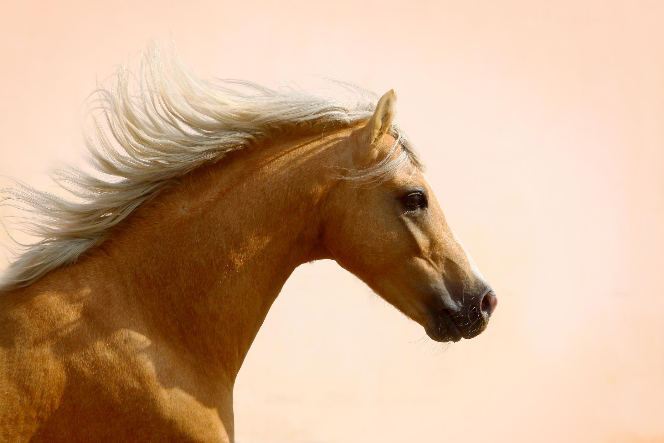 Palomino Horse Names Lovetoknow