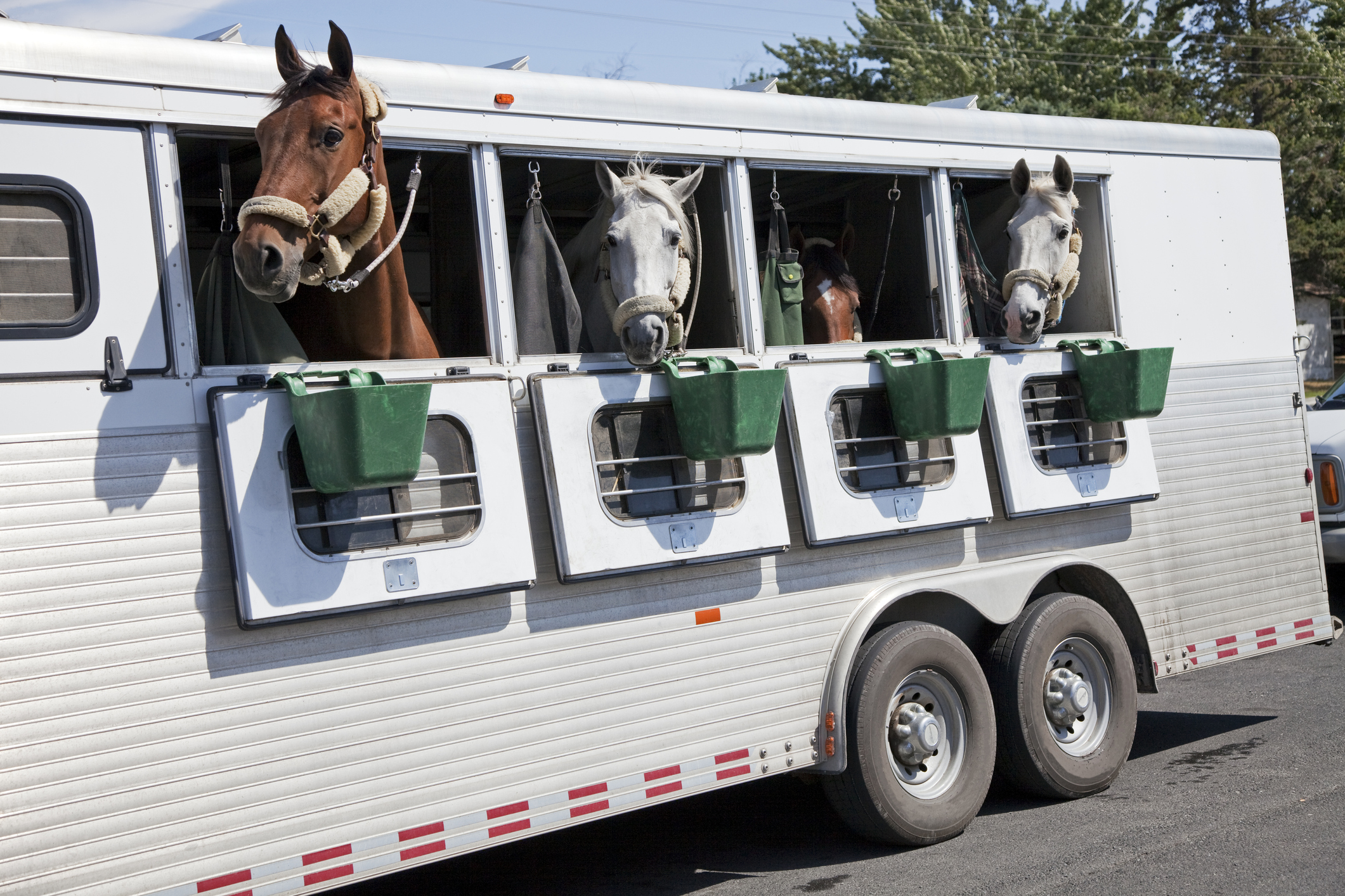 Horse Trailers Lovetoknow