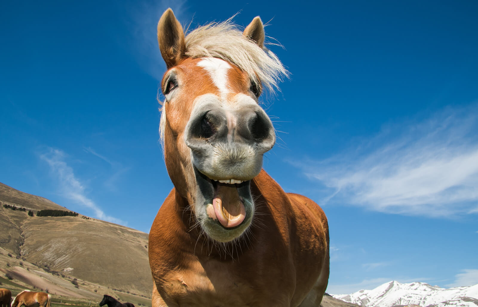 9 Funny Horse Show Videos Lovetoknow