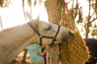 Slow Horse Feeding