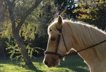Spanish Horse Names