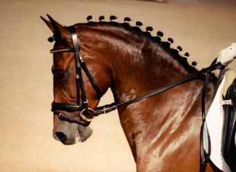 Elegant Horse Names
